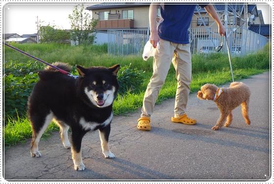 2013,8,28お散歩5