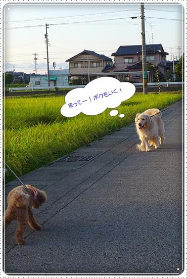 2013,8,28お散歩4