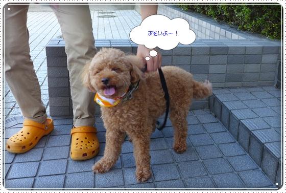 2013,8,28お散歩2