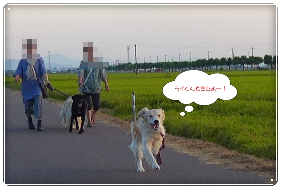 2013,8,28お散歩9