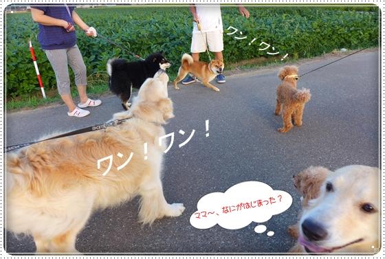 2013,8,28お散歩7