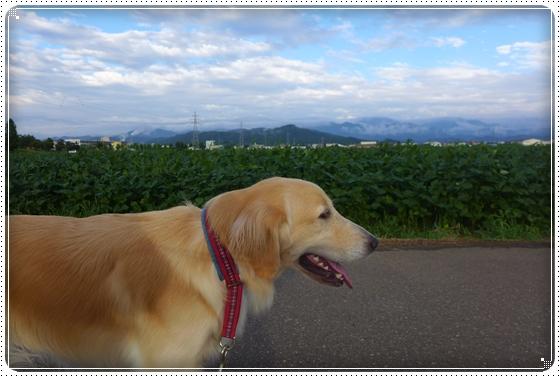 2013,9,1お散歩3