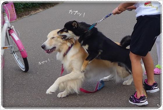 2013,9,1お散歩8