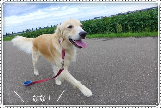 2013,9,3お散歩2