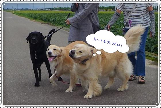 2013,9,6お散歩3