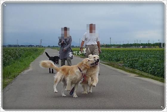 2013,9,6お散歩2