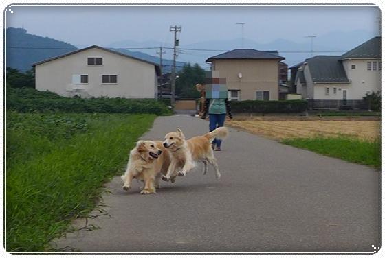 2013,9,12お庭遊び10