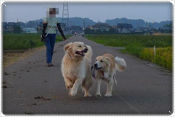 2013,9,13お散歩6