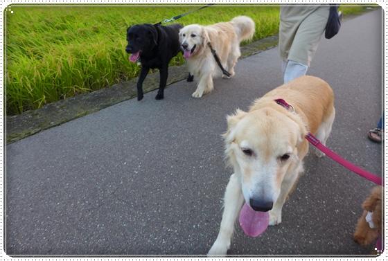 2013,9,13お散歩7