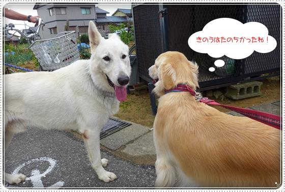 2013,9,15お散歩4
