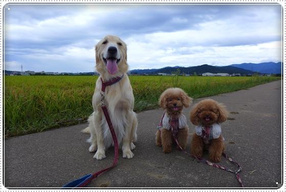 2013,9,15お散歩2