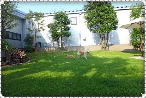 2013,9,23お庭遊び5