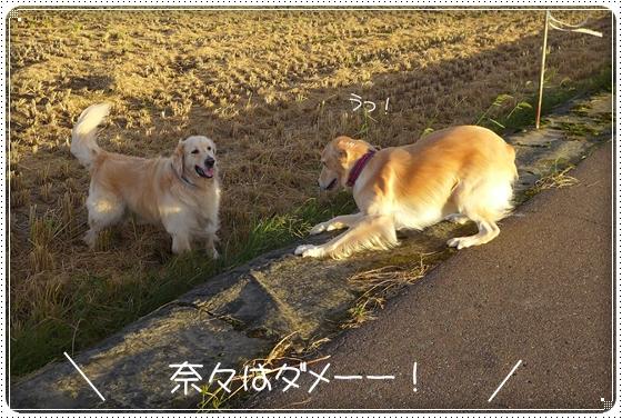 2013,9,26お散歩5