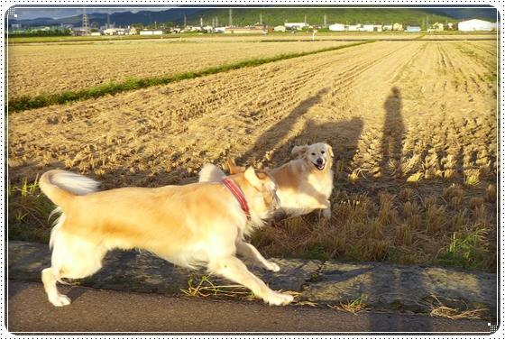 2013,9,26お散歩3