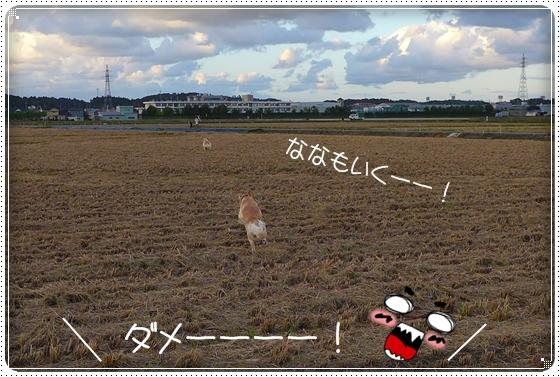 2013,9,26お散歩10