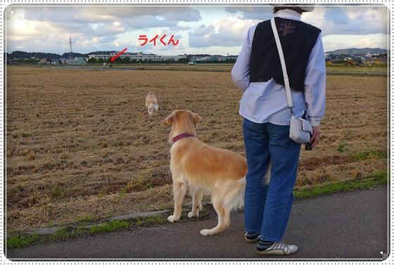2013,9,26お散歩8