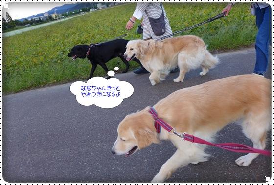 2013,9,26お散歩18