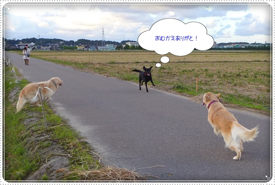 2013,9,26お散歩15