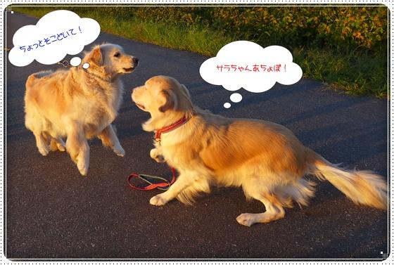 2013,9,27お散歩5