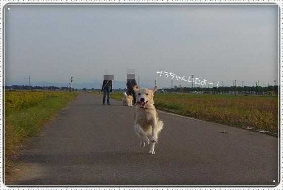 2013,10,4お散歩5