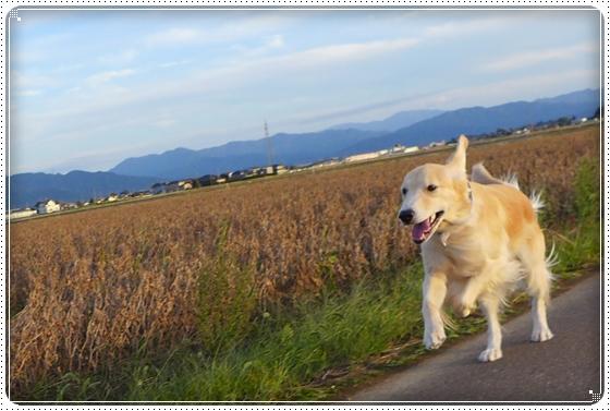 2013,10,17お散歩3
