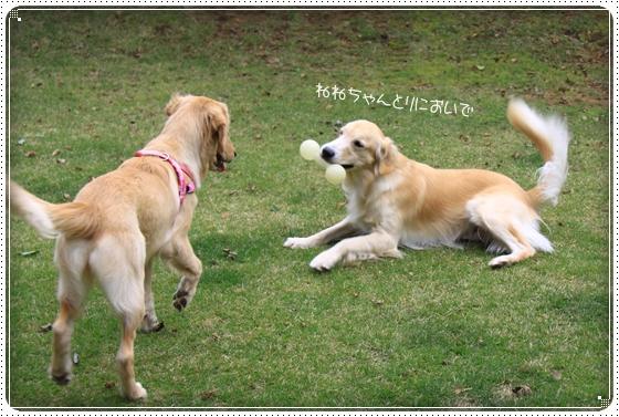 2011,11,3お友達4