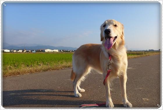 2013,11,5お散歩2