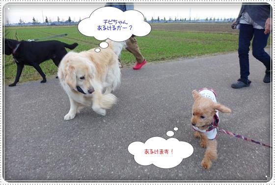 2013,11,6お散歩7