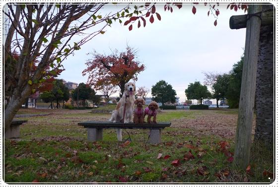 2013,11,9お散歩2
