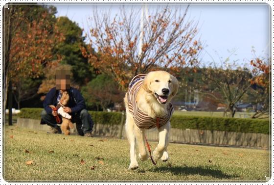 2013,11,14お散歩7