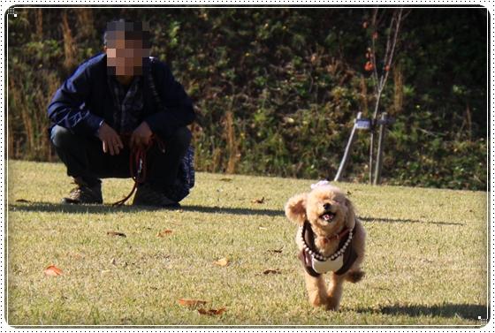 2013,11,14お散歩3