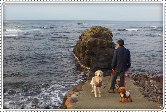 2013,11,14お散歩18