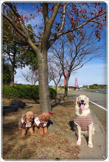 2013,11,14お散歩23