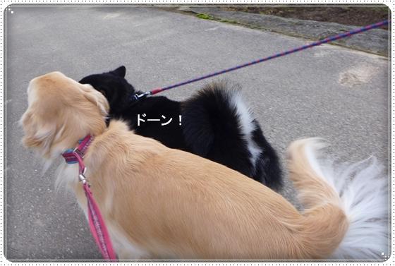 2013,11,15お散歩5