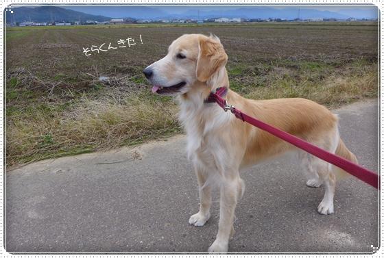 2013,11,15お散歩2
