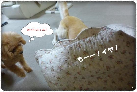 2013,11,28お散歩7
