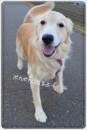 2013,11,30お散歩6