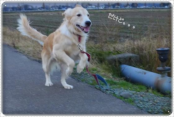 2013,11,30お散歩4