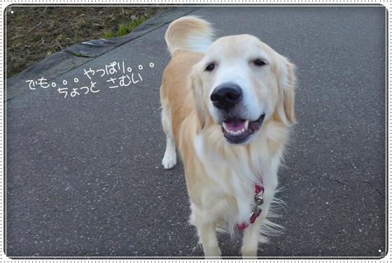 2013,11,30お散歩3