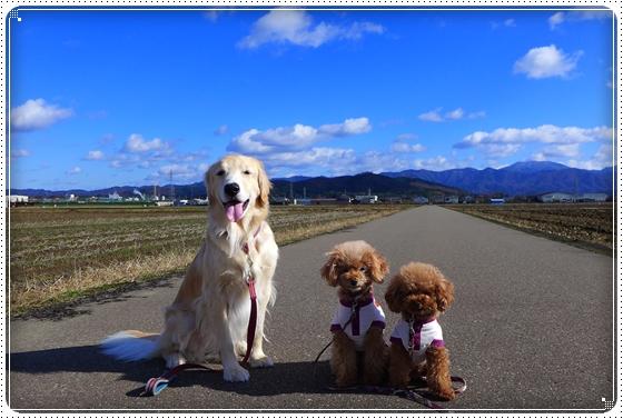 2013,12,8お散歩4