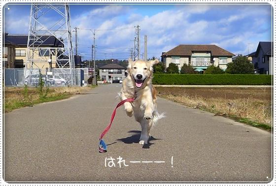 2013,12,8お散歩1