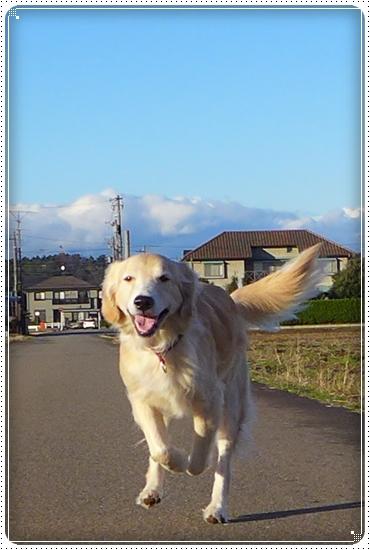 2013,12,19お散歩4