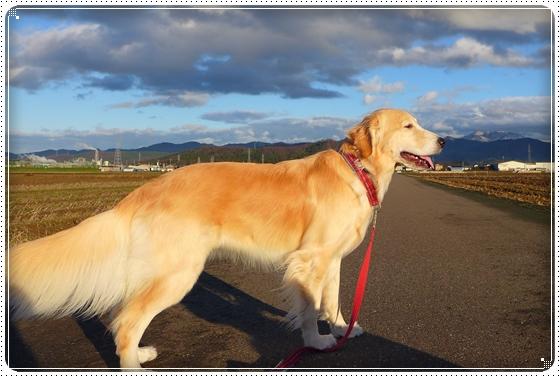 2013,12,19お散歩10