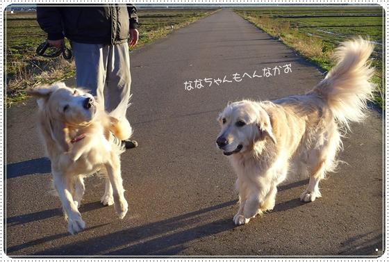2013,12,19お散歩8