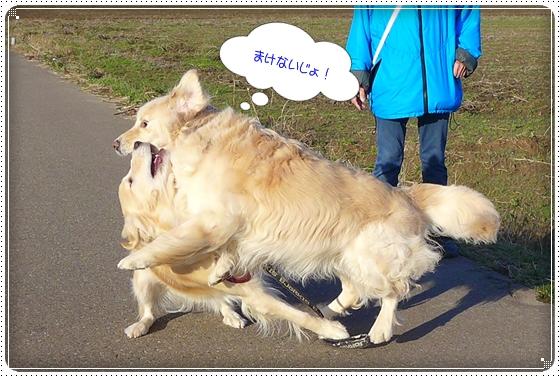 2013,12,25お散歩11