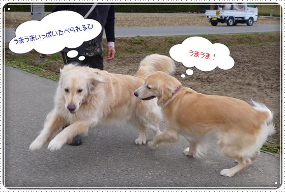 2013,12,26お散歩5