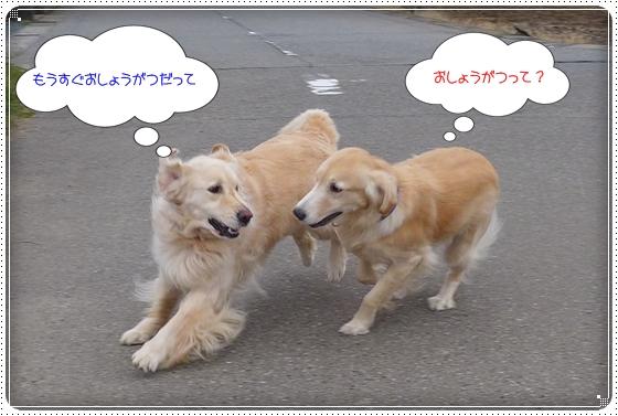 2013,12,26お散歩4