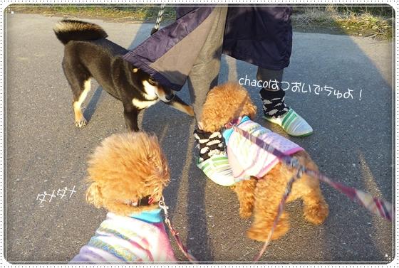 2014,1,24お散歩9