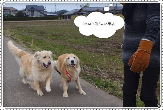 2014,1,25お散歩8