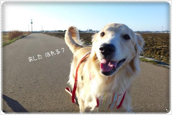 2014,1,27お散歩5